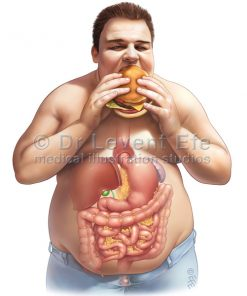 Gastrointestinal (GIT)